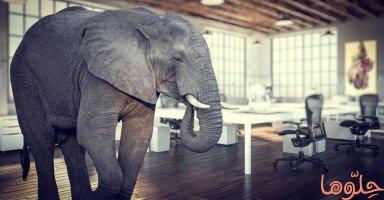 تفسير رؤية الفيل في المنام وحالات رؤية الفيل في الحلم