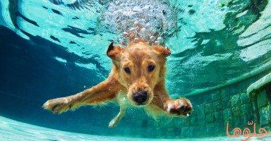 الكلاب في المنام وتفسير رؤية الكلب في الحلم بالتفصيل