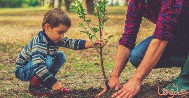تفسير رؤية الشجرة في المنام وتفسير حلم الأشجار بالتفصيل