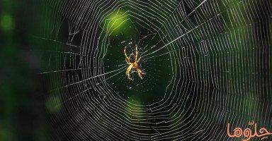 العنكبوت في المنام وتفسير رؤية العناكب في الحلم بالتفصيل