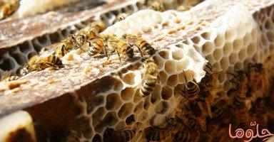 فوائد شمع العسل (Beeswax)