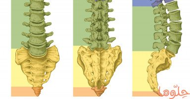 بنية العمود الفقري وأهم الأمراض التي تصيب فقرات الظهر