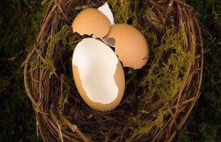 تفسير رؤية البيض في المنام ومعنى حلم البيض بالتفصيل
