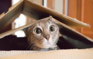 القطة في المنام وتفسير رؤية القطط في الحلم بالتفصيل