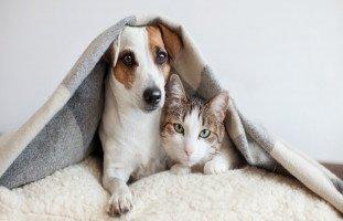 الحيوانات الأليفة والأطفال... هل ينصح بتربية الحيوانات الأليفة؟