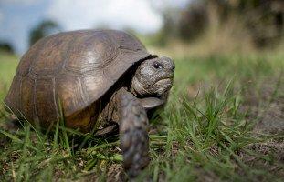 السلحفاة في المنام وتفسير رؤية السلاحف في الحلم بالتفصيل