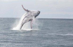 سماع صوت الحوت الأزرق في مصر وليبيا وحقيقة صوت الحوت الأزرق