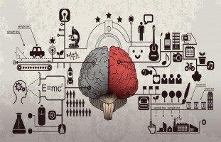 الذكاءات المتعددة وأنواع الذكاء عند الإنسان