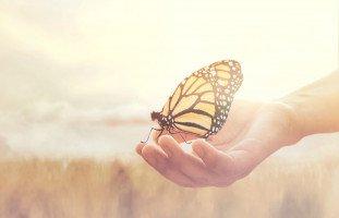 الفراشات في المنام وتفسير حلم الفراشة بالتفصيل