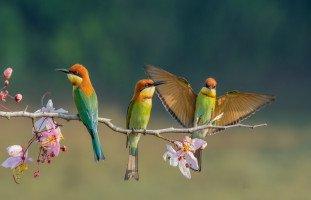 العصافير في المنام وتفسير رؤية العصفور بالتفصيل