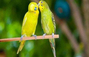 الطيور على أشكالها تقع وهكذا عرفت حب حياتي